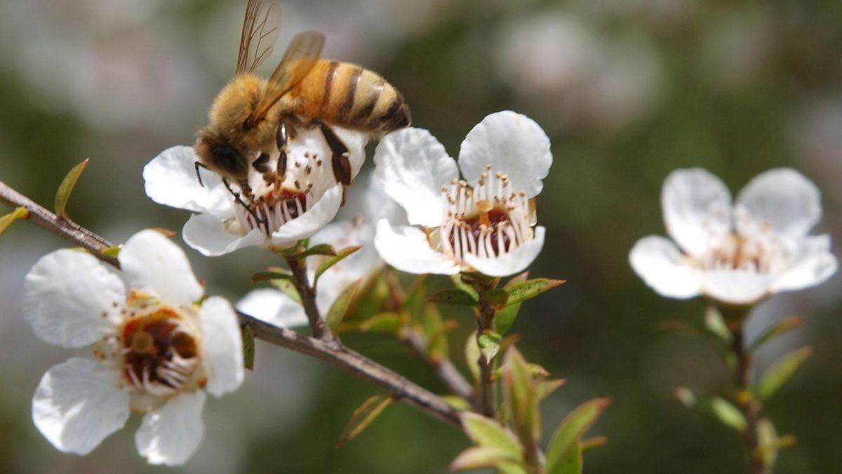 Mật ong đắt nhất thế giới, bạn đã từng thử chưa?