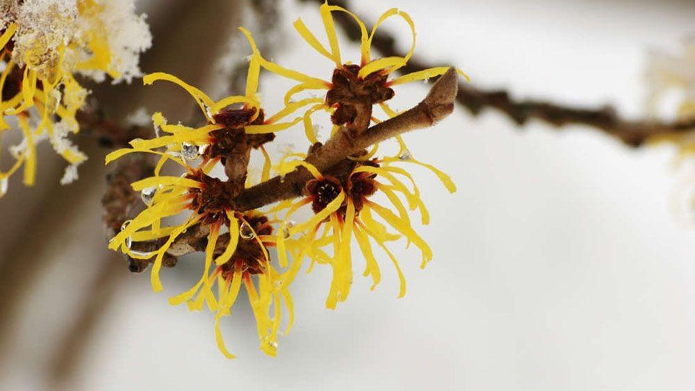 Loài cây kì lạ có khả năng bắn hạt giống bằng lực của một khẩu súng